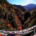 Photos: 2012年 11月20日 大井川鉄道井川線 関の沢鉄橋からの紅葉