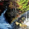 写真: 虹と紅葉のコラボ