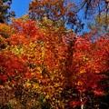 中禅寺湖畔の紅葉、見頃^^