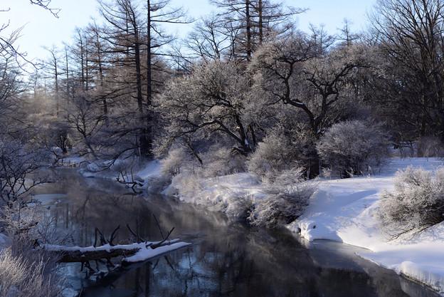 奥日光湯川の霧氷