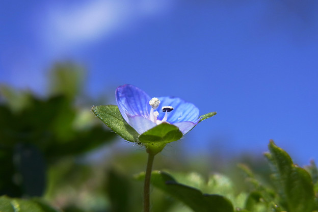 青空のヒトミ