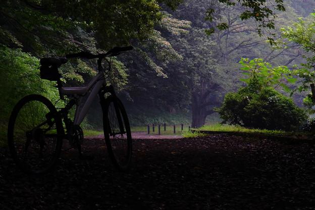 森閑とした小径