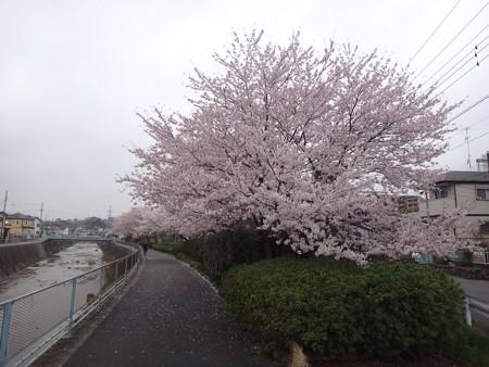 130330 鶴見川