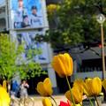 横浜公園~横浜スタジアム