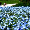 Photos: くりはま花の国