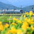 写真: 小田急・富水~栢山