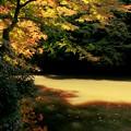 Photos: 瀬上池