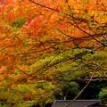 Photos: 鹿島神宮