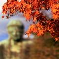 Photos: 鎌倉大仏