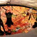 Photos: Another Autumn