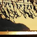 江ノ島ワカメ畑