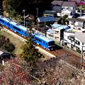 お花見電車(京急ブルスカバージョン)