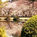 Photos: 都心の春