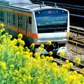 お花見電車(中央線バージョン)