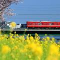 Photos: 春色京急