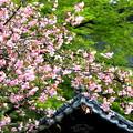 花海棠と新緑