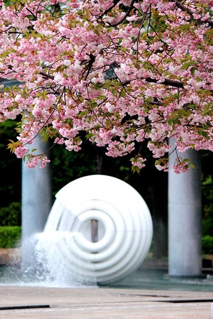 Photos: Sakura Fauntain