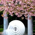 Sakura Fauntain