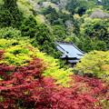 新緑の大山寺