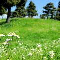 貧乏草の丘