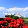 Yokohama Rose