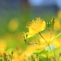Photos: Sunlight
