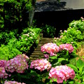 プチ紫陽花寺