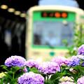 Photos: あじさい電車(都電バージョン)