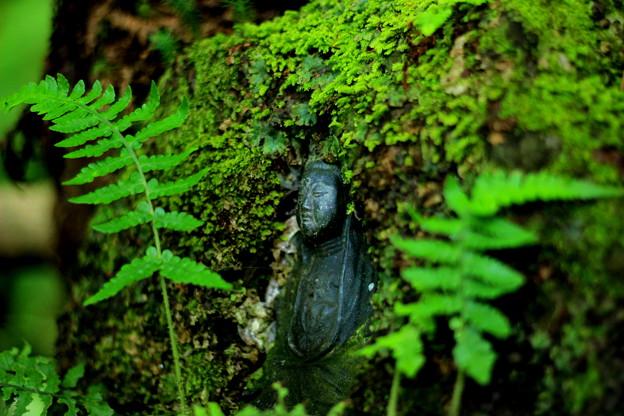 苔寺の仏様
