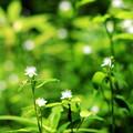 Photos: 渓谷に咲く花