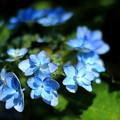 Photos: 八景ブルー