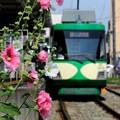 Photos: 花咲く電停