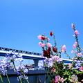 お花見電車(シーサイドラインバージョン)