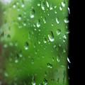 Photos: 雨音はショパンの調べ