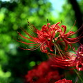 Photos: 秋花~Red Side