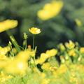 Photos: Lemon Bright