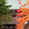 秋色参道(なんちゃって紅葉)