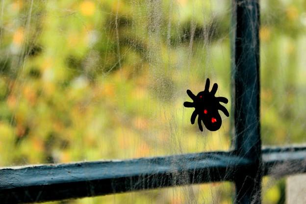 Photos: Itsy Bitsy Spider