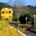 花咲く小駅