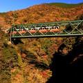 Photos: 紅葉電車~箱根登山鉄道バージョン~