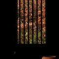 写真: 古民家の秋