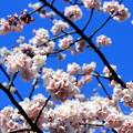写真: 春だより