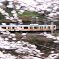 Photos: 疾走!桜電車