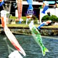 写真: 鯉の舞