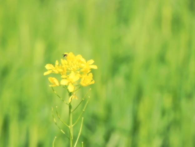 Yellow On Green