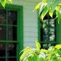Noguchi Green