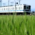 のんびり麦電車
