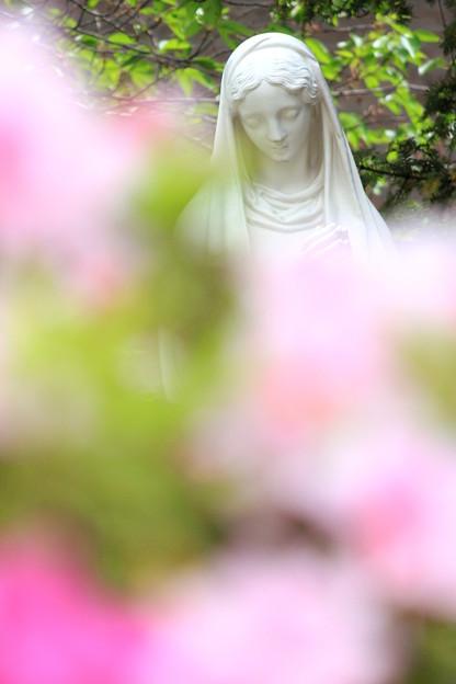 お花見サンタマリア