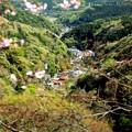 Photos: 大山の春