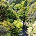 Photos: 緑の谷